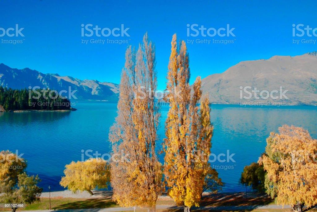 Yeni Zelanda'da bir otelden yakalanan 's zafer doğada. - Royalty-free Doğa Stok görsel