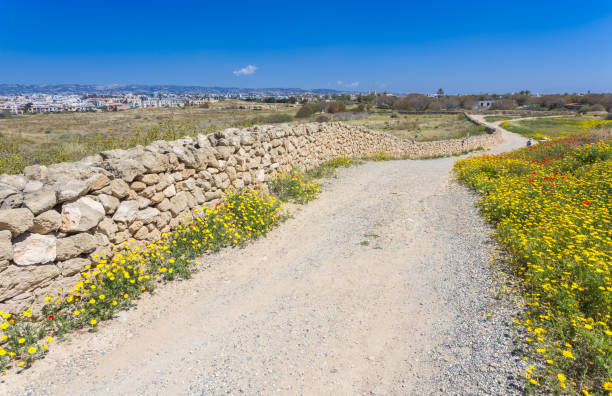 Nature in Kato Paphos Archaeological Park, Cyprus stock photo