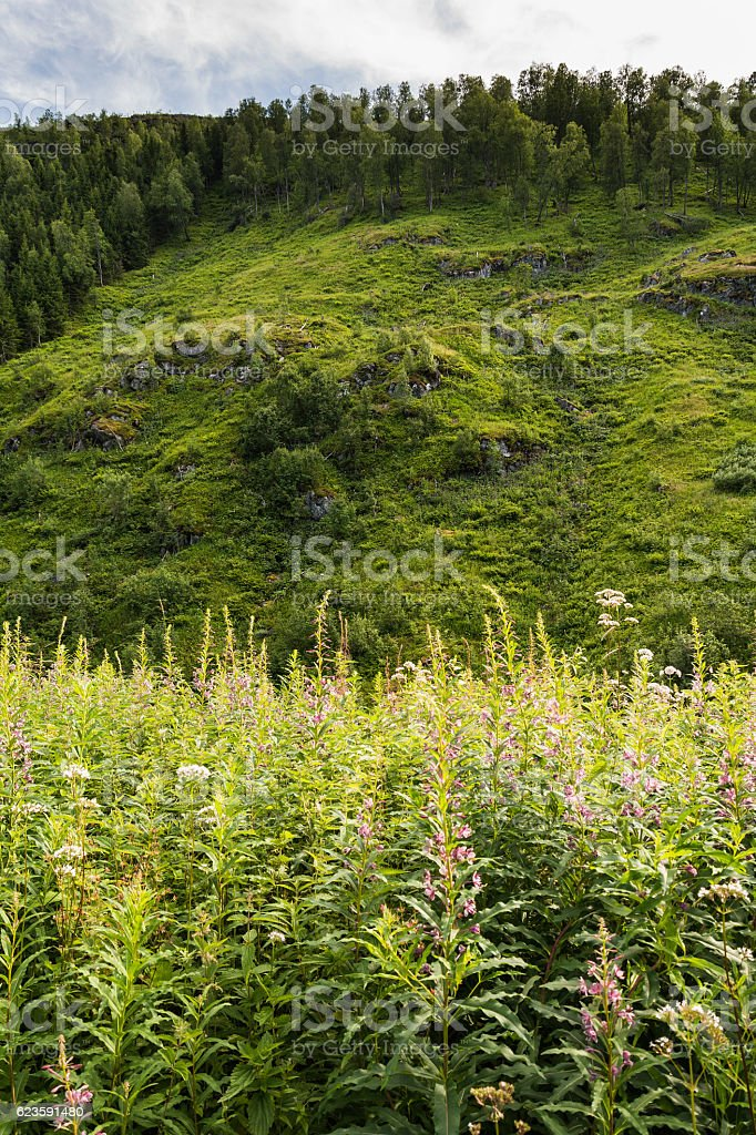 Nature in Norway stock photo