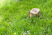 Close up photo of a tree trunk on the green grass.