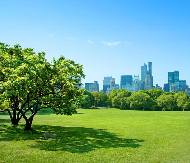 自然の街 - 緑 ビル ストックフォトと画像