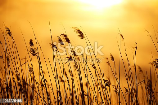 grass and straws in the sunset time on the meadow.