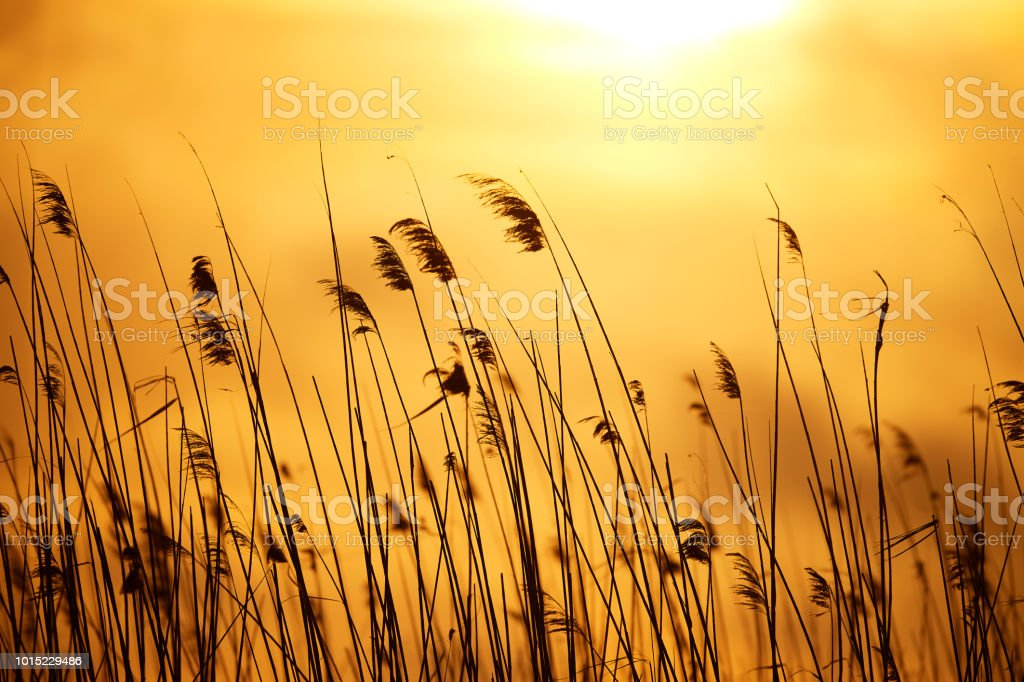 nature in the sunset stock photo
