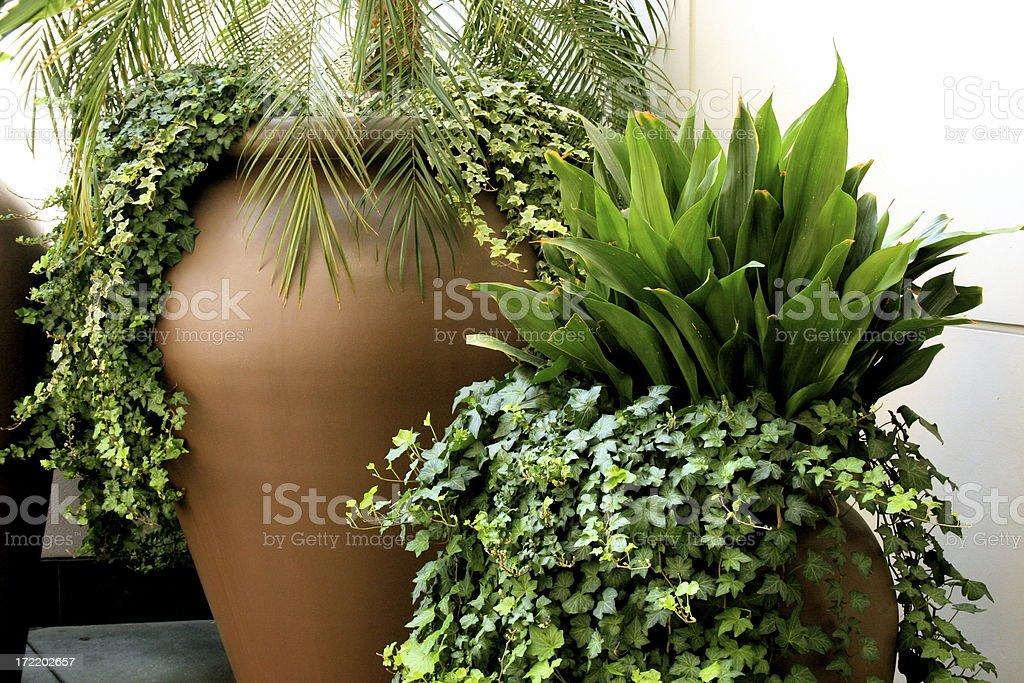 nature inside royalty-free stock photo