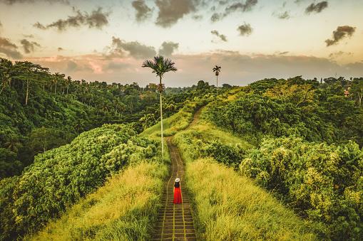 Nature Is Bliss — стоковые фотографии и другие картинки Campuhan