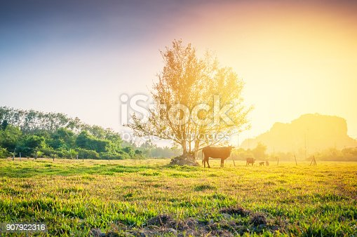 istock Nature Landscape of a green field with cow 907922316