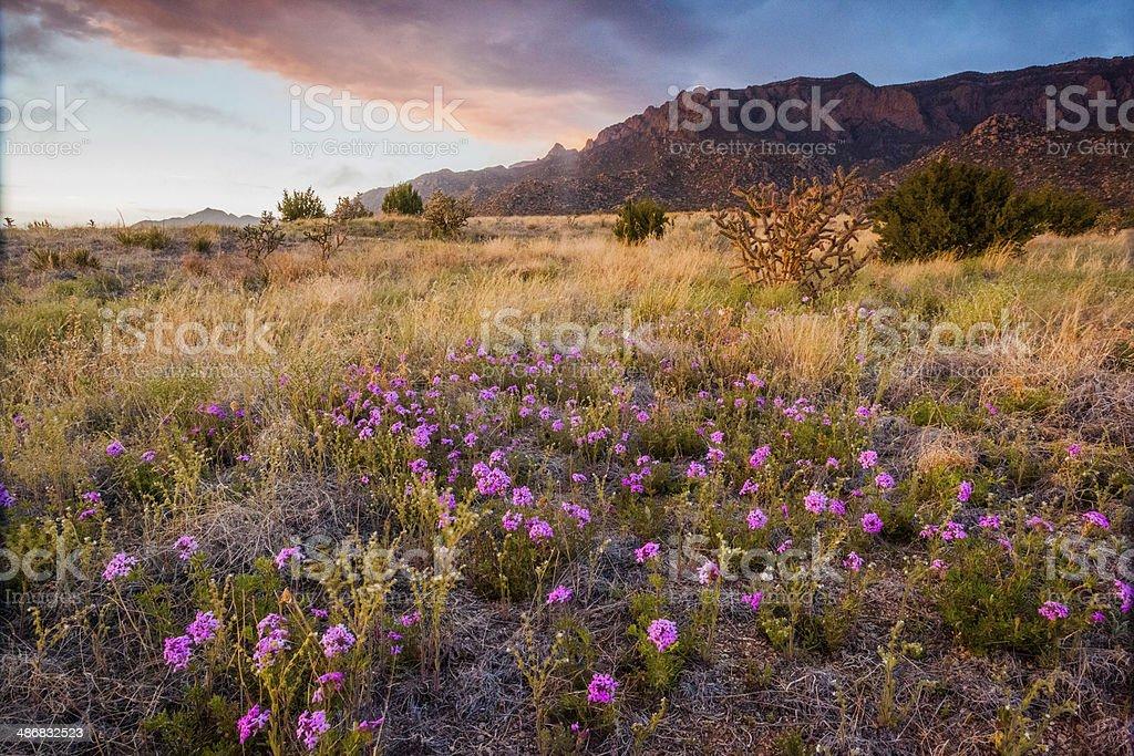 nature landscape sunset stock photo