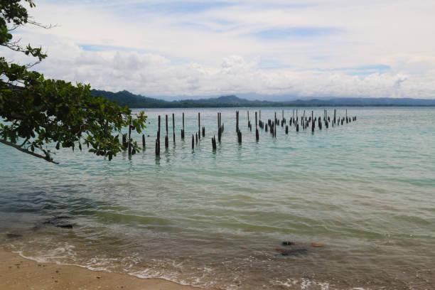 naturlandschaften in costa rica. wildtiere. amerika reisen. fernweh. - urbanara stock-fotos und bilder