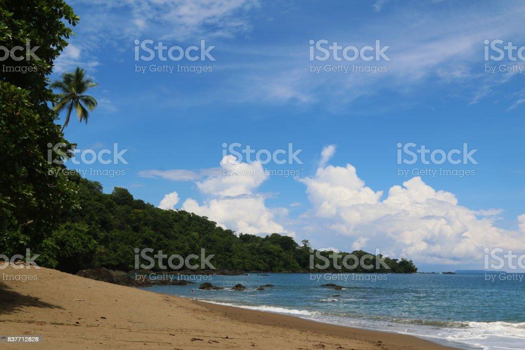 Nature landscapes in Costa Rica. Wildlife animals. America Travel. Wanderlust. stock photo
