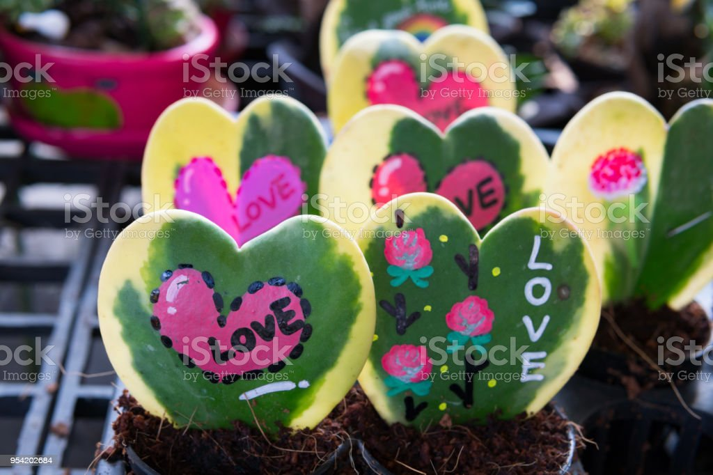 nature love,green hoya leaf  with text love stock photo