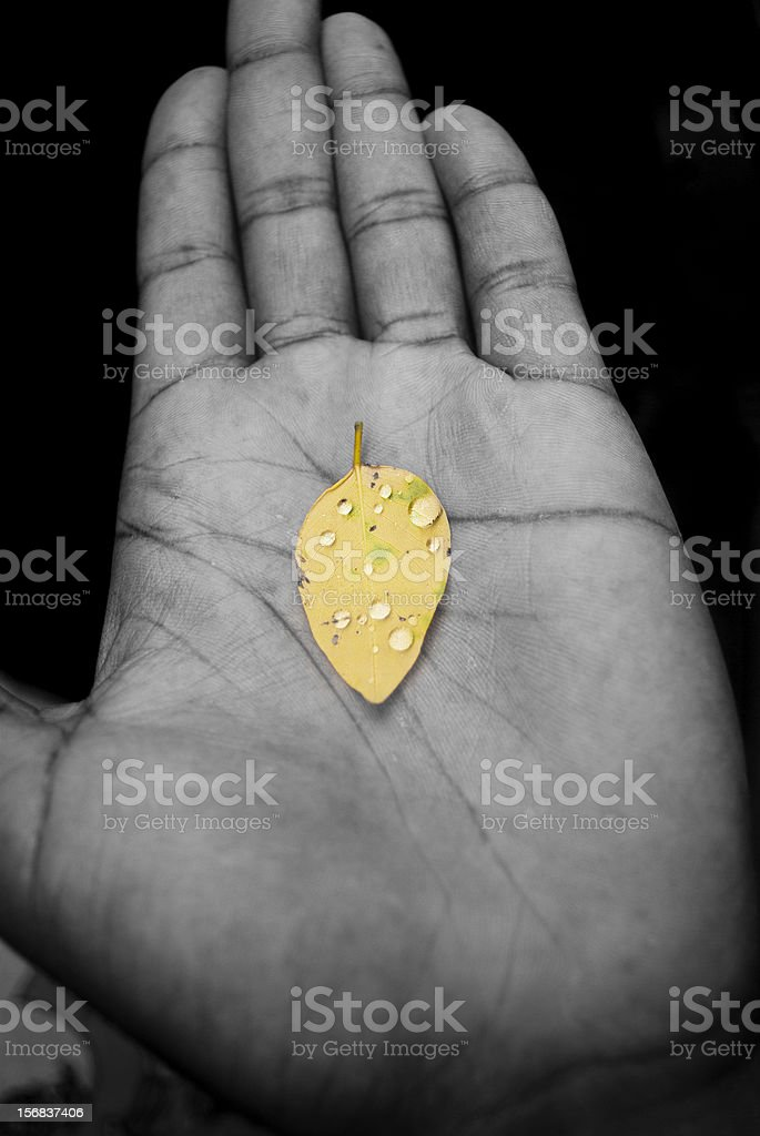 nature lover; yellow leaf in palm of hand royalty-free stock photo