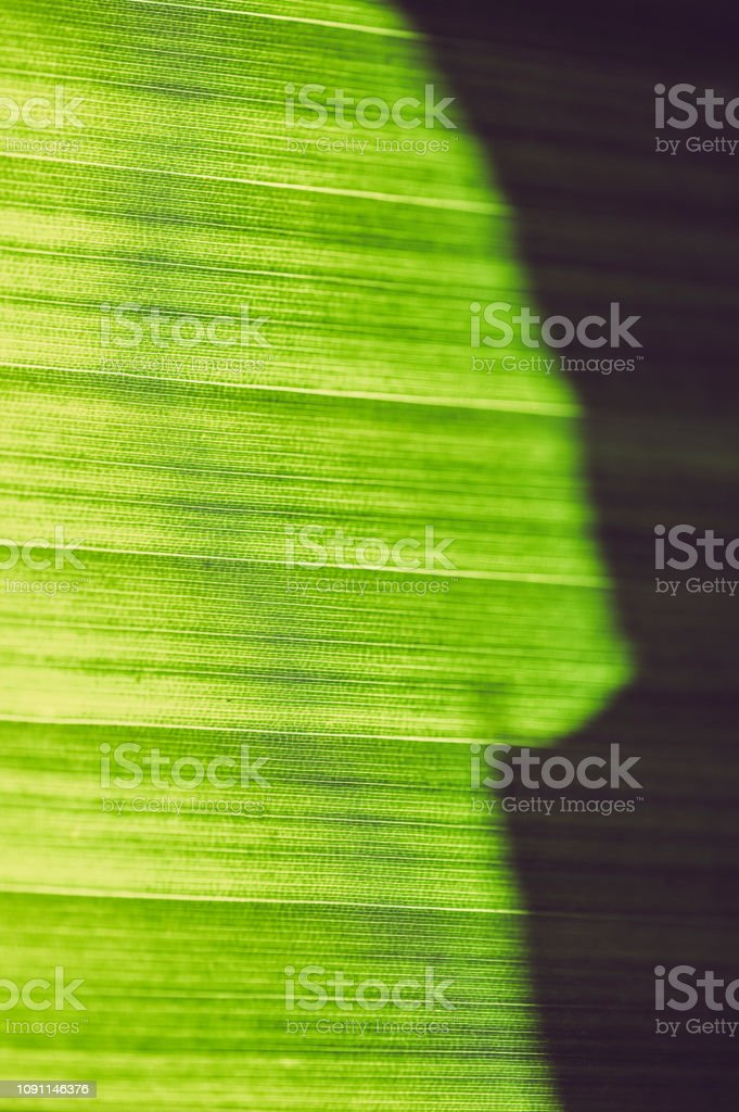 Extreme close up of palm leaf, striations, pattern in nature, beauty...