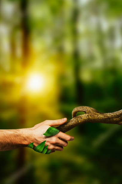 Nature manipulation. Handshaking with nature. Human hand. Nature. Forest. stock photo