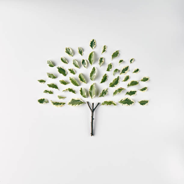 nature minimal concept - tree logo stock photos and pictures