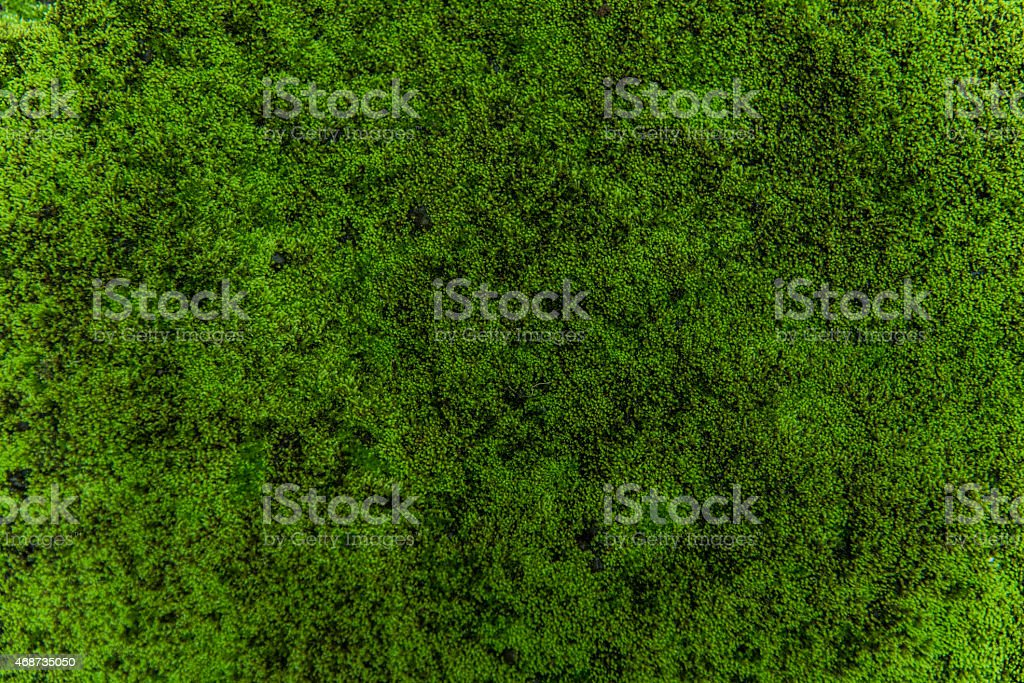 nature moss stock photo