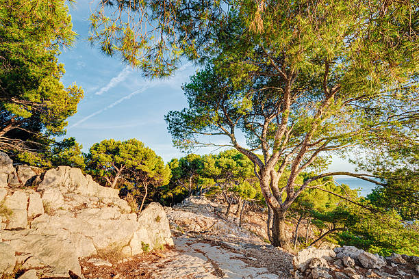 nature of calanques on the azure coast of france. calanques - naaldbos stockfoto's en -beelden