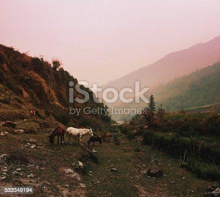 istock Nature of Nepal 533349194