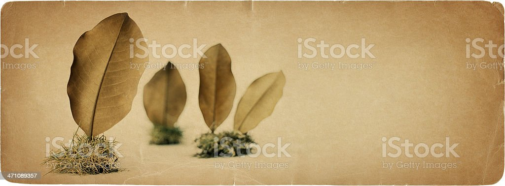 Nature on Paper 8 royalty-free stock photo