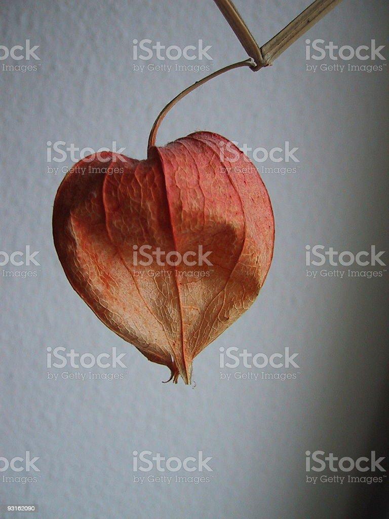 nature - orange fruit royalty-free stock photo