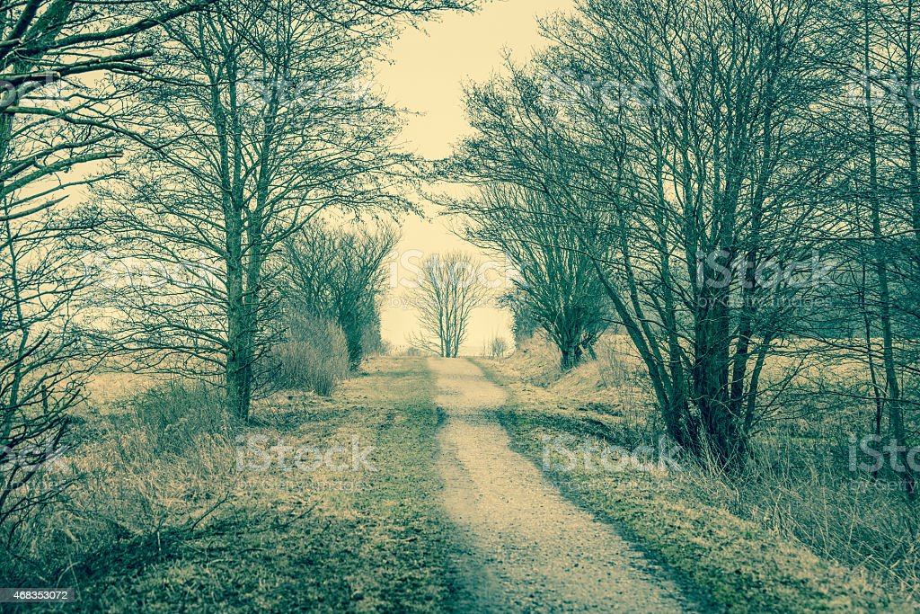 Nature path with trees royalty-free stock photo
