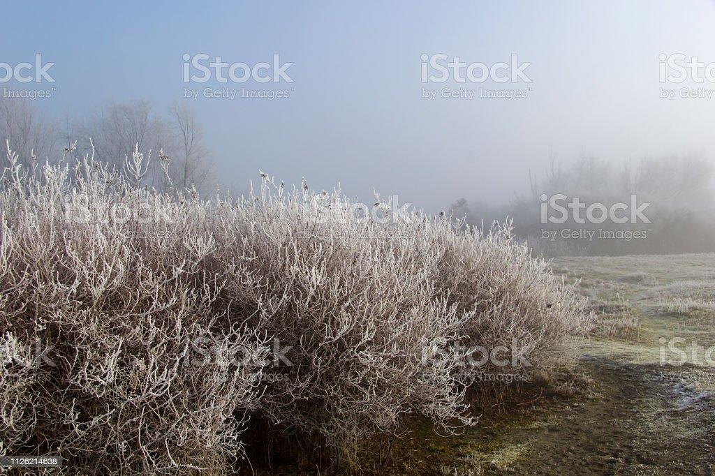 Nature Photography stock photo