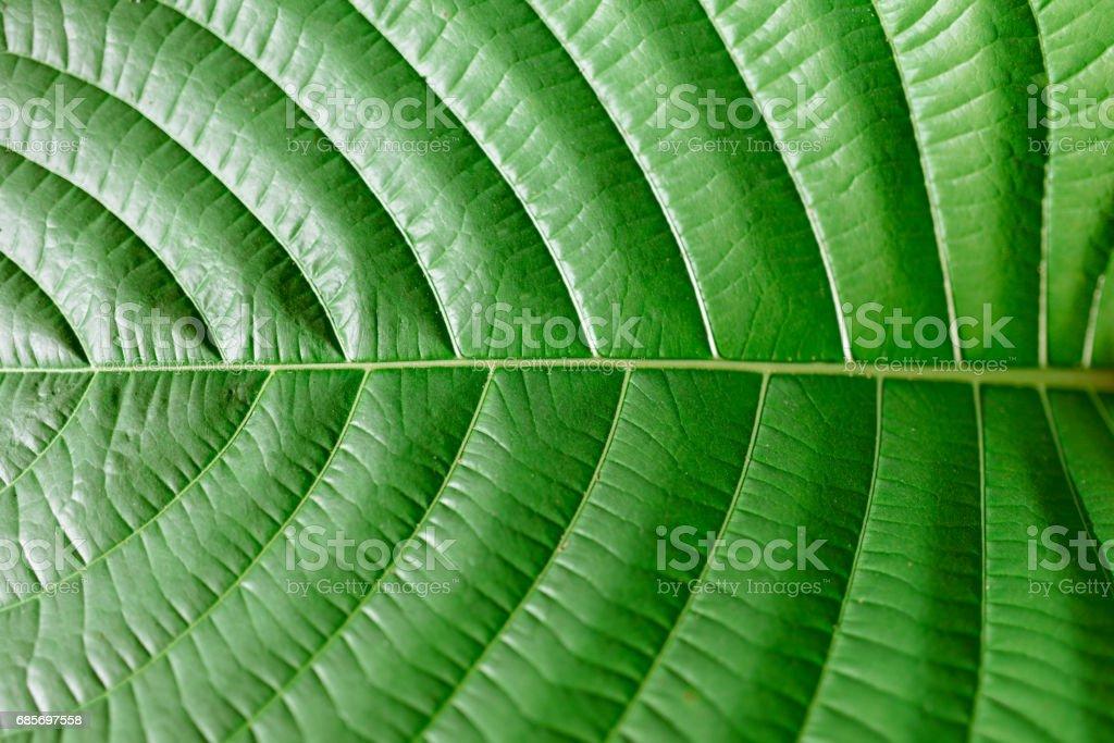 自然の写真 ロイヤリティフリーストックフォト