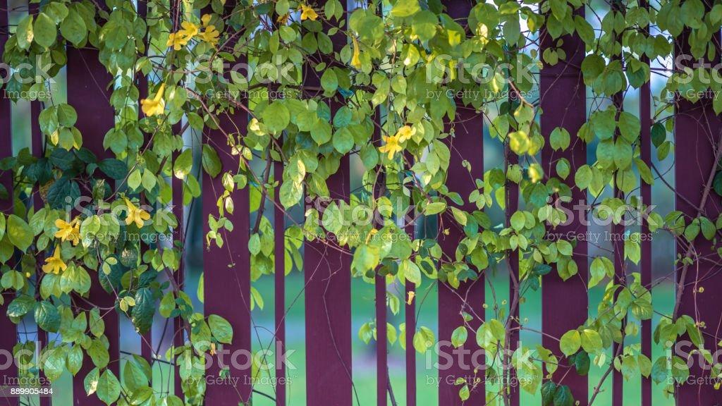 Nature Photos stock photo