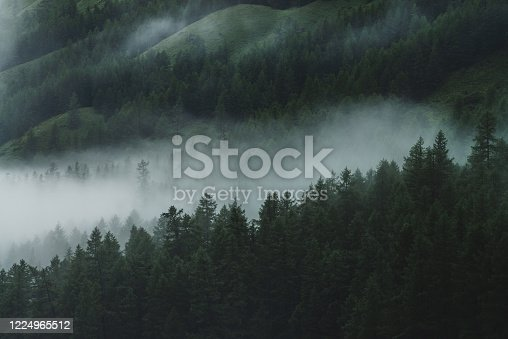 Low cloud in alpine dark forest. Aerial atmospheric mountain landscape in foggy woods. View from above to misty forest hills. Dense fog among coniferous trees in highlands. Hipster, vintage tones.