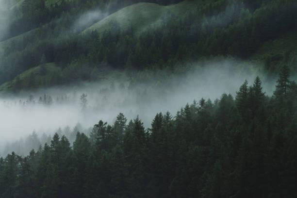 aard - altai nature reserve stockfoto's en -beelden