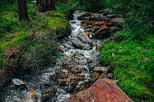 Beautiful mountain creek with many stones among rich flora in dark forest. Atmospheric landscape with small river. Big boulders with green mosses and orange lichens in water stream of mountain creek.