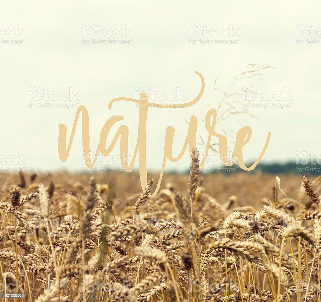 La Nature  photo libre de droits