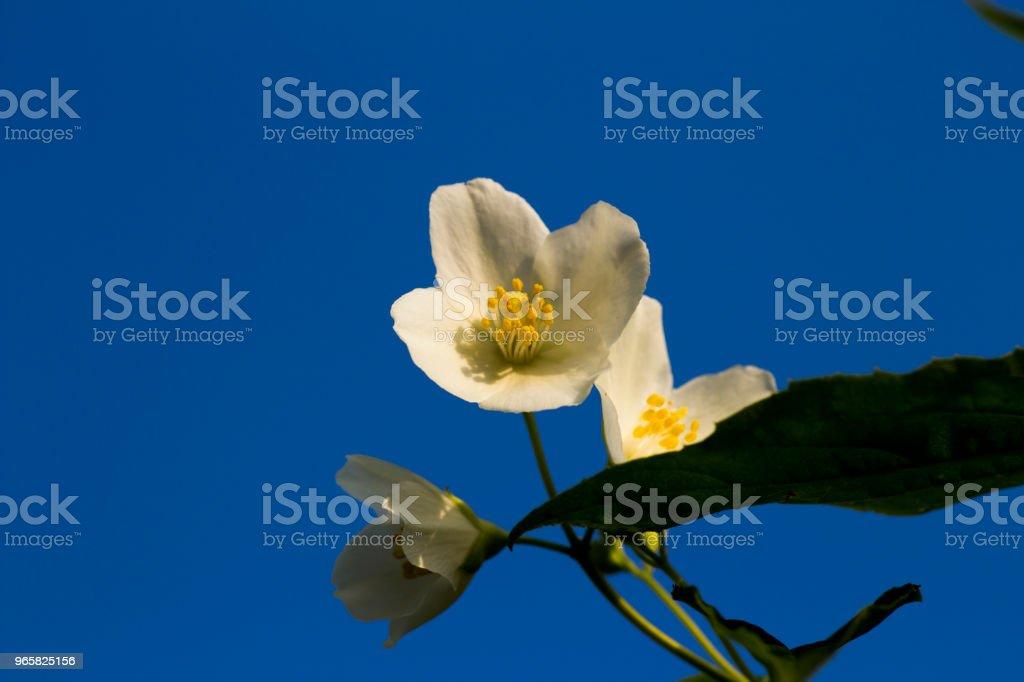 Natuur - Royalty-free Apparatuur Stockfoto