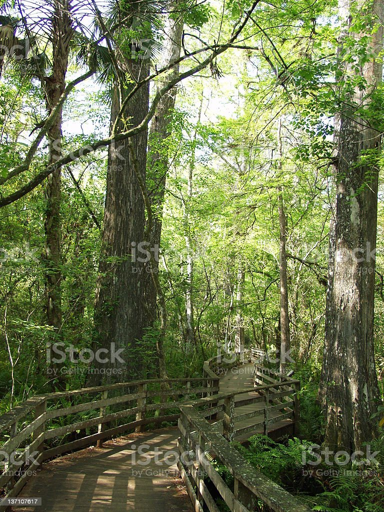 Nature Preserve 2402 royalty-free stock photo