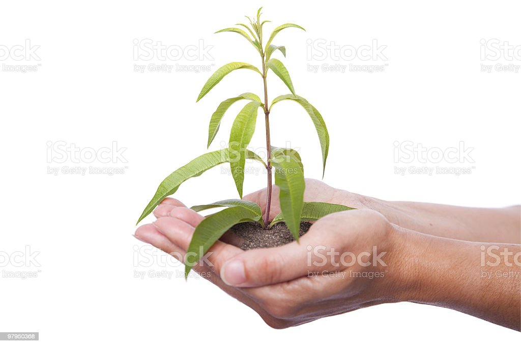 Nature protection royalty-free stock photo