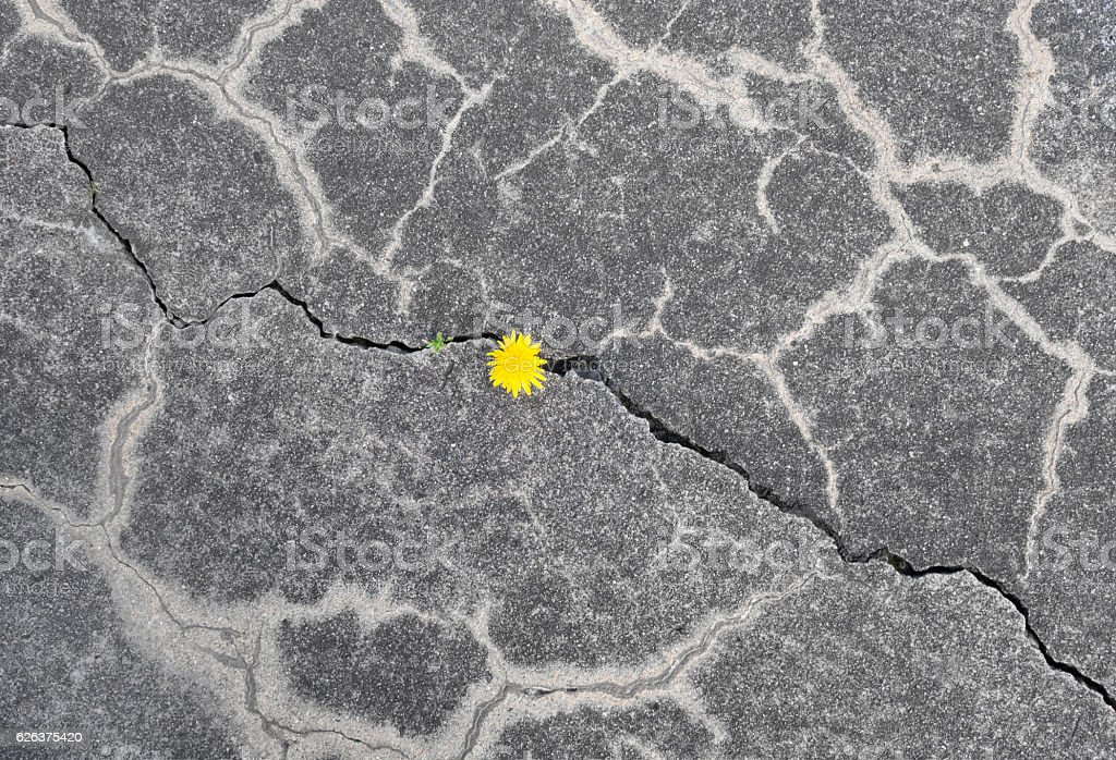 Nature reconquers concrete pavement – Foto