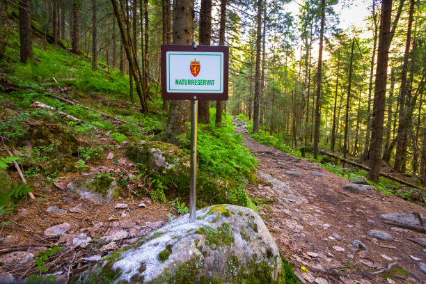 nature reserve sign in the forest in tovdal. norwegian landscape. - nature reserve stock photos and pictures