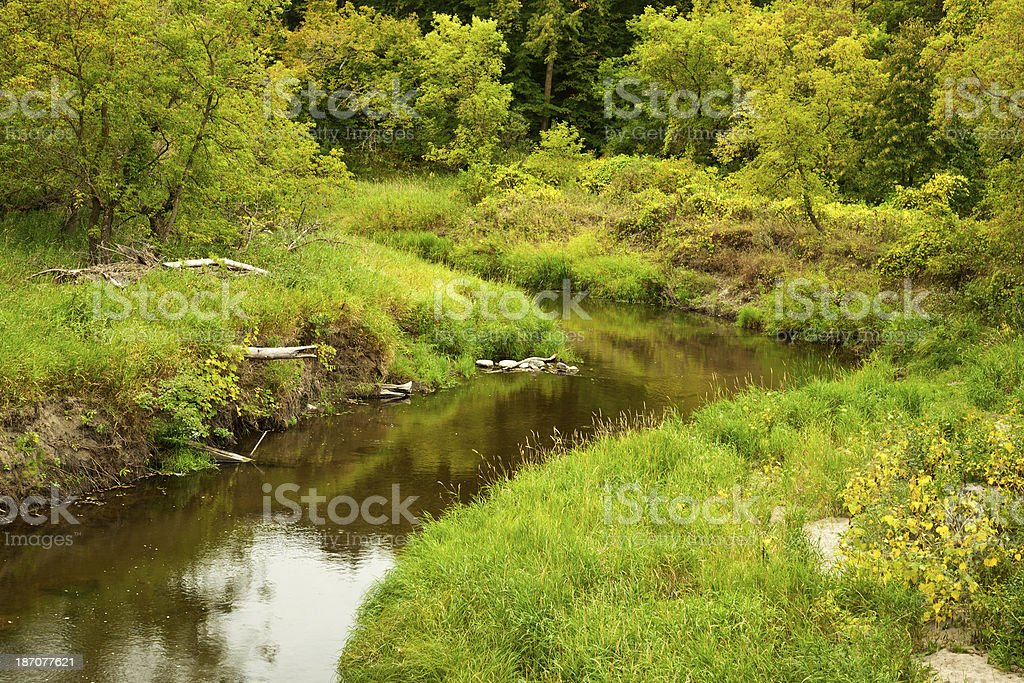 Nature: River and Lush Forest Foliage royalty-free stock photo