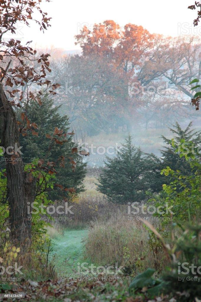 Nature scenes royalty-free stock photo