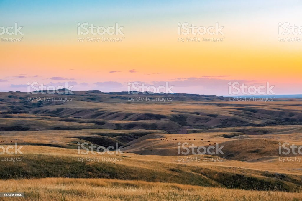 Nature scenic Montana landscape - Cattle grazing in the distance on grassy hills under colorful sky at sunset stock photo