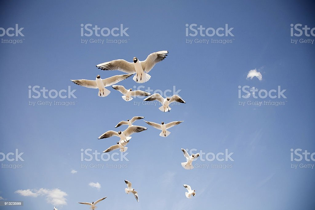 Nature - seaguls group royalty-free stock photo