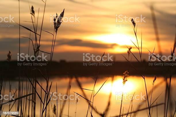 Photo of Nature: Seashore Sunset