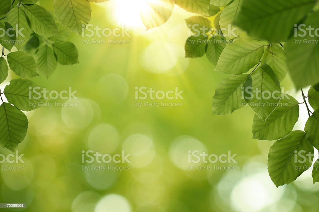 Nature spring, summer background stock photo