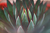 Nature - Succulents - shades of green in San Diego, CA, United States
