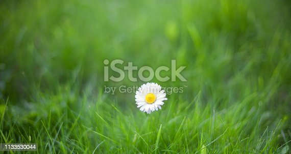 istock Nature Summer Background with single Daisy flower 1133530044