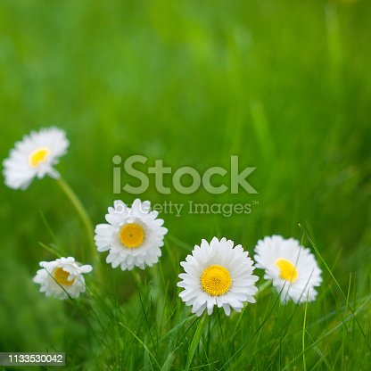 istock Nature Summer Floral Background 1133530042