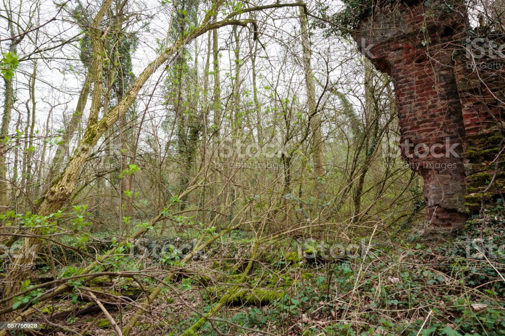 Nature takes back his Area / Germany stock photo