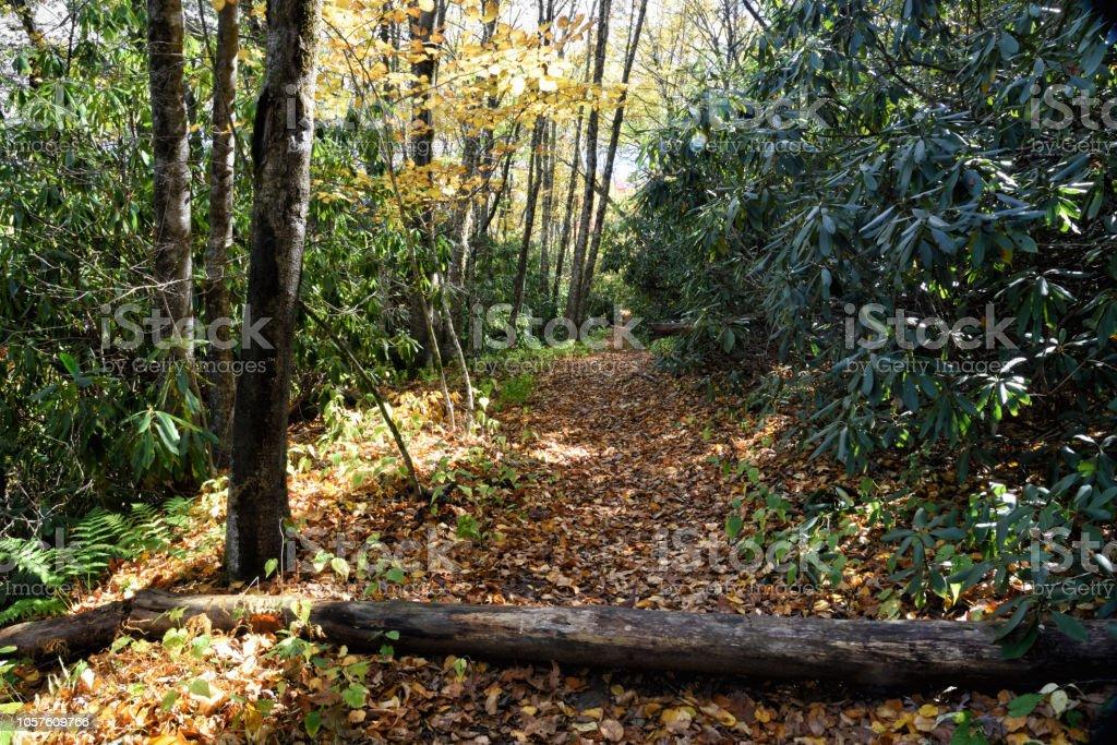 Nature Trail at Brasstown Bald Mountain in Georgia USA stock photo