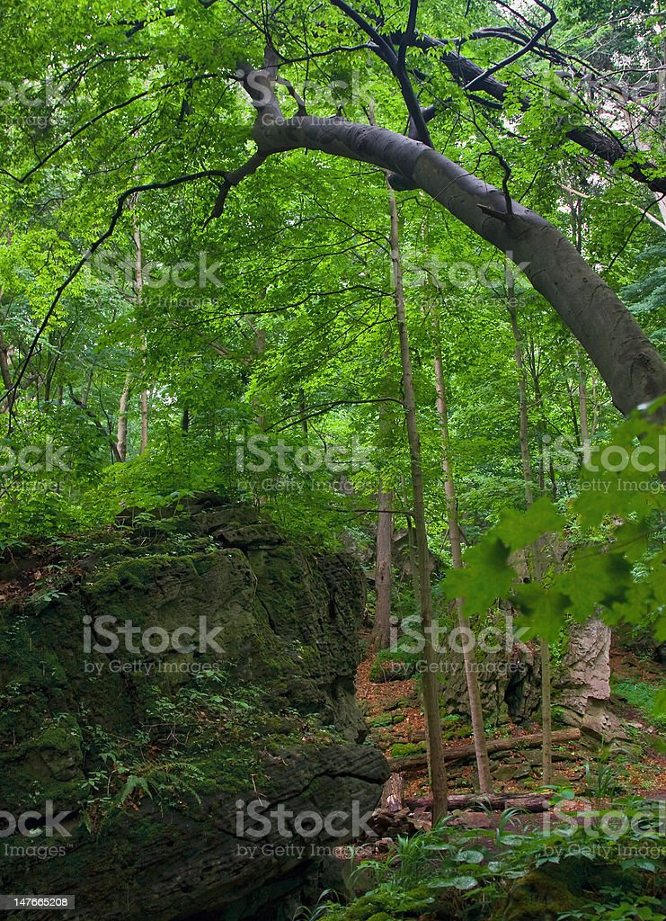 Nature Trail at the Niagara Glen - Royalty-free Arch - Architectural Feature Stock Photo