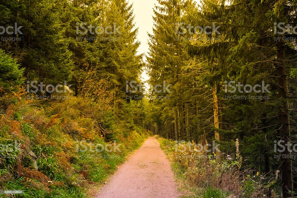 Nature Trail in Black Forest, Germany, Europe stock photo
