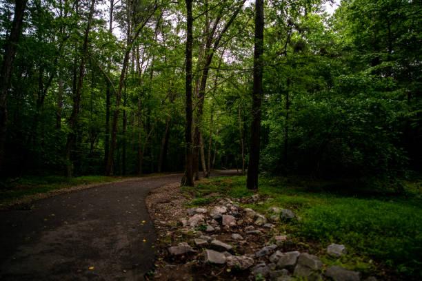 Nature Trail stock photo